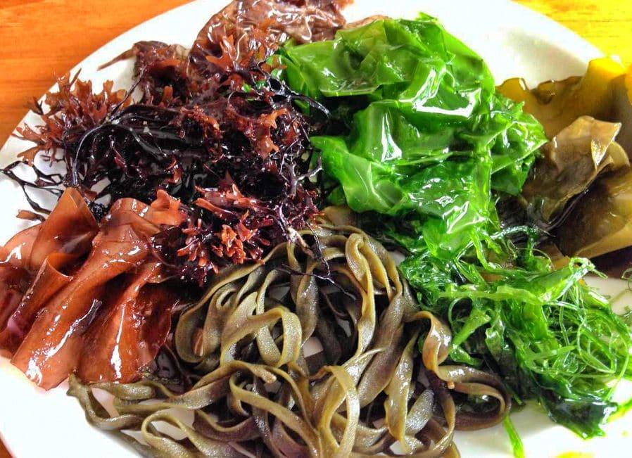 Différentes Algues Comestibles